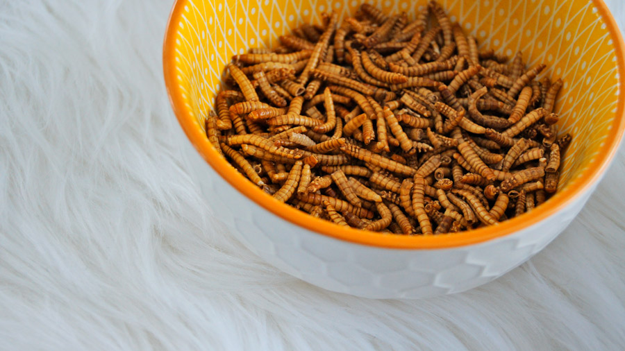Futura Food insectes comestibles made in Bourgogne