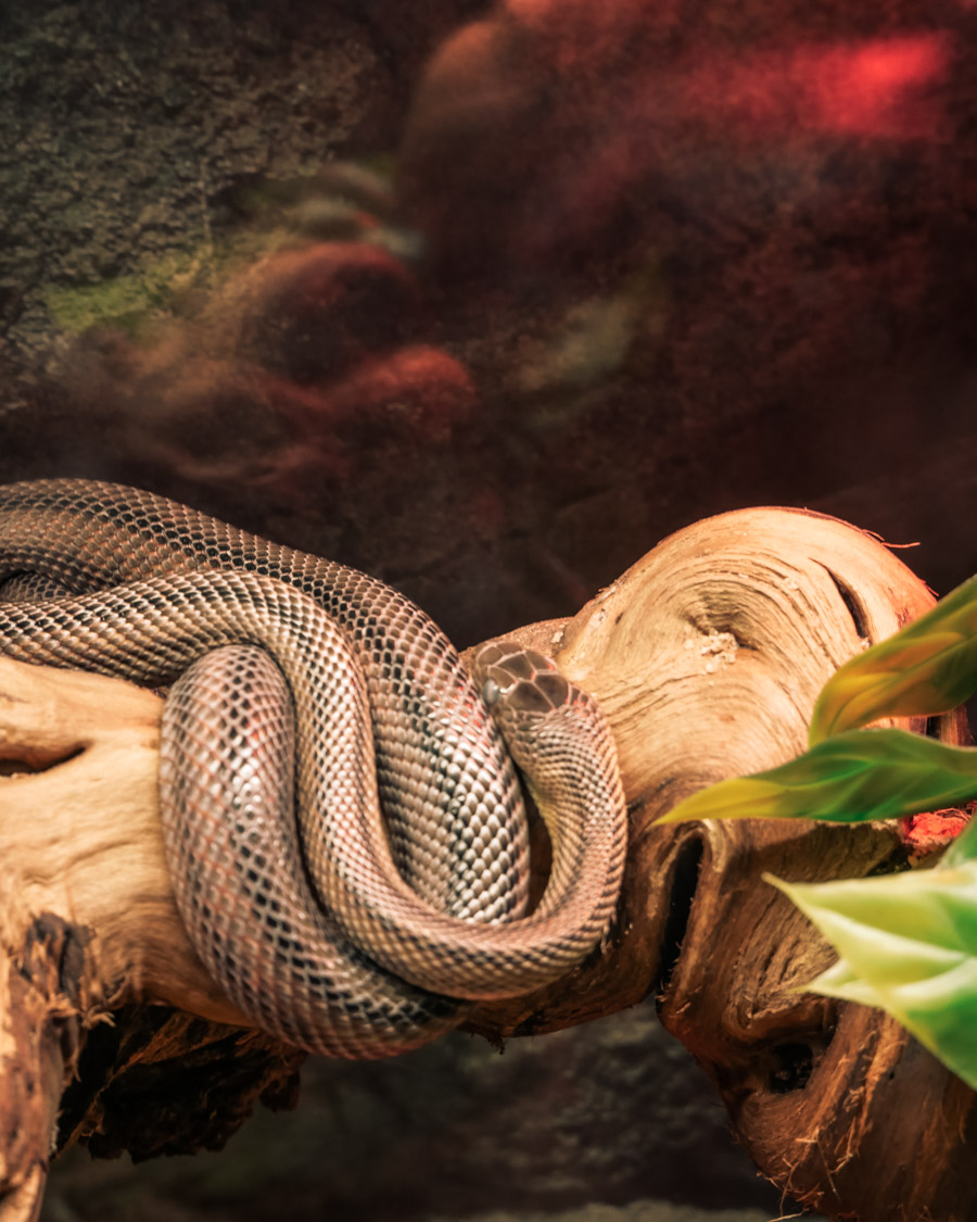 Parc de l'Auxois serpent