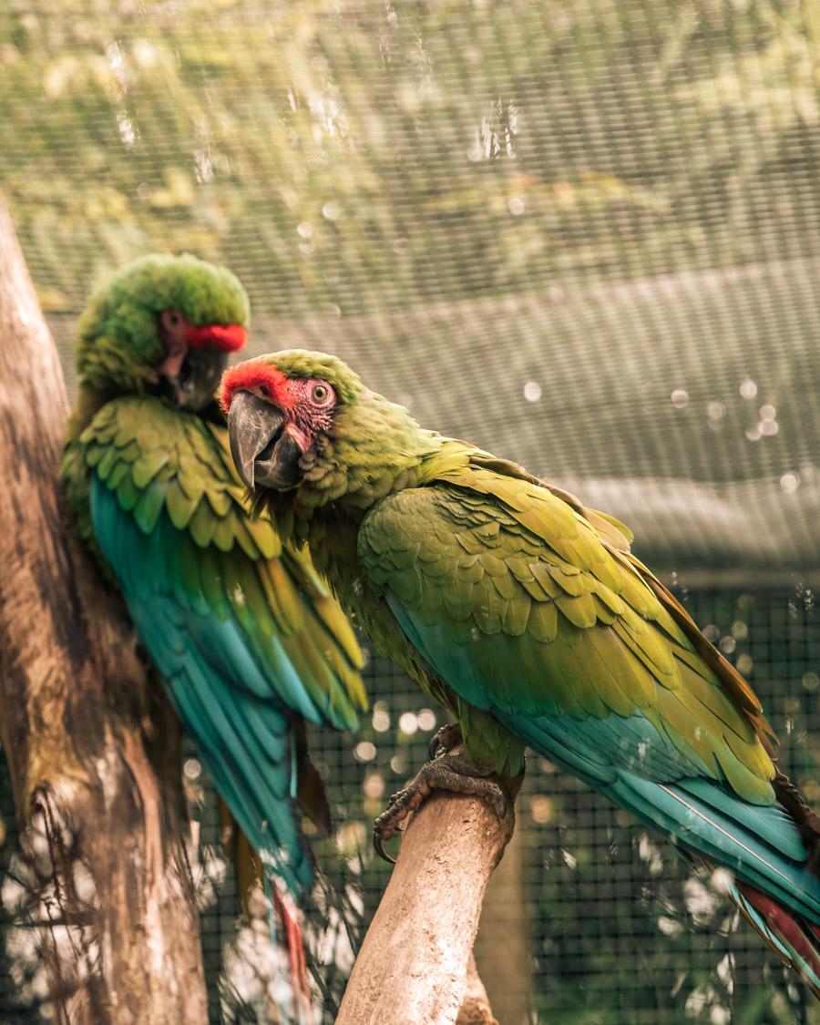 Parc de l'Auxois perroquets