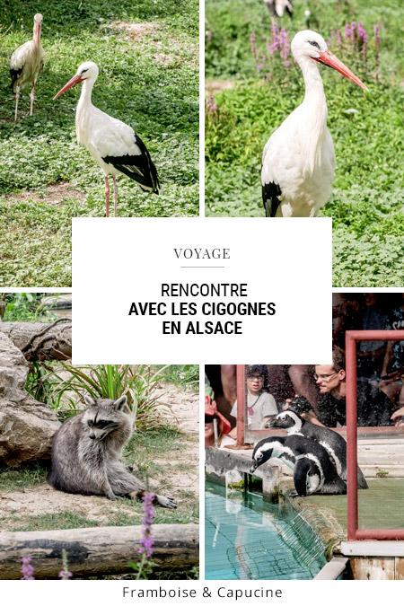Rencontre avec les cigognes en Alsace