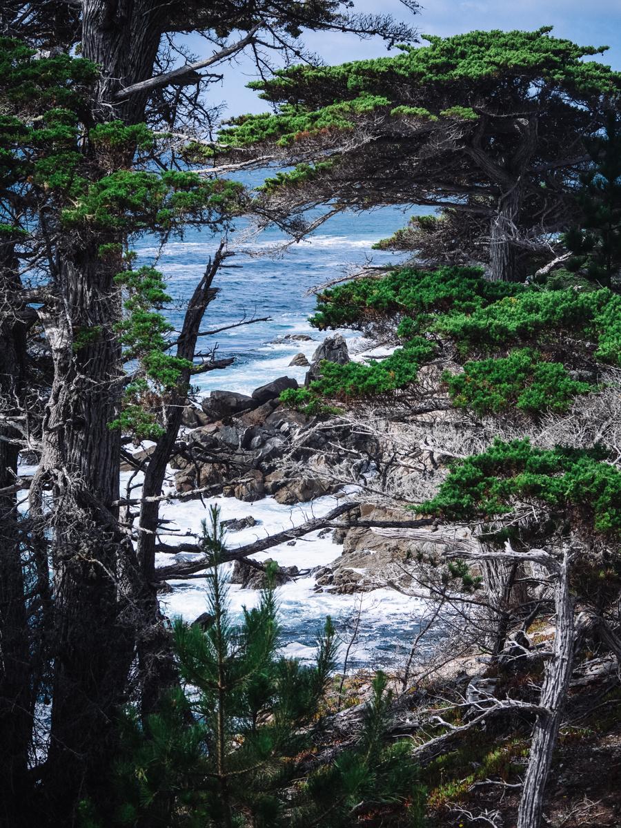 Monterey Carmel