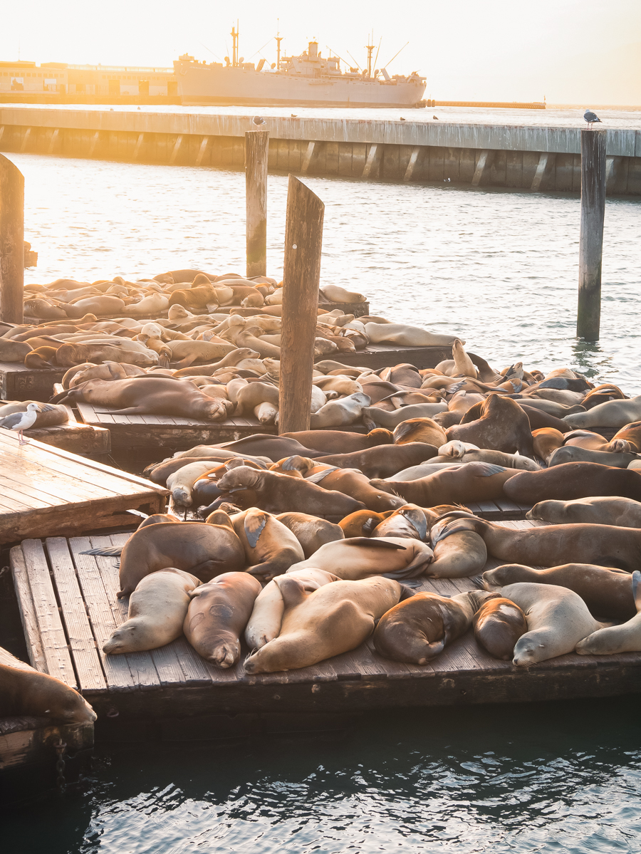 Ouest américain San Francisco lions de mer