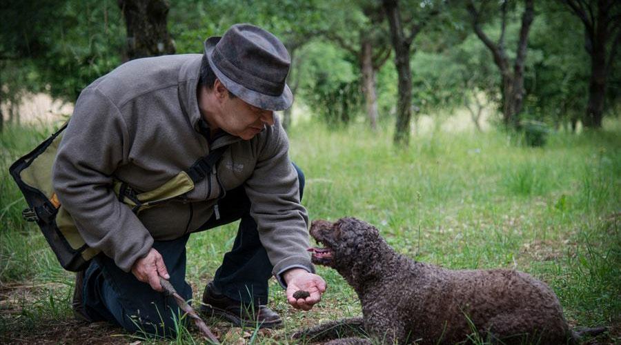 Truffes de Bourgogne Marey-les-Fussey