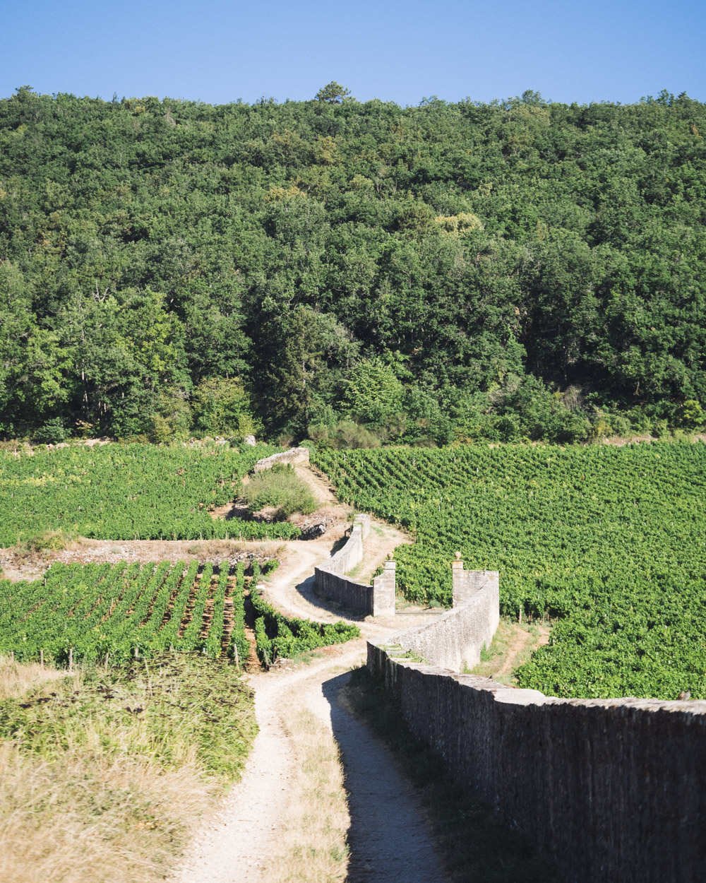 Gevrey-Chambertin visite vignes