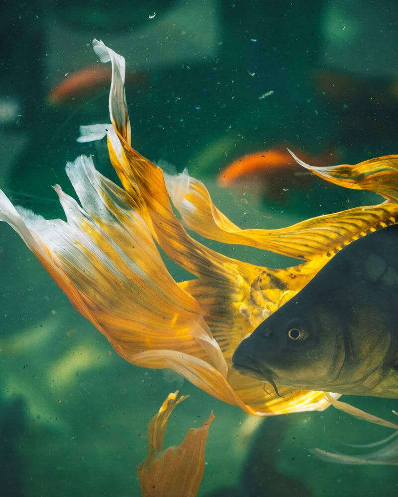 Citadelle de Besançon aquarium