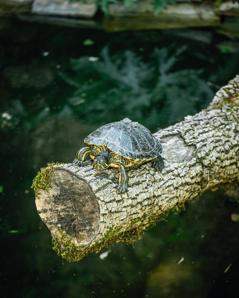 Citadelle de Besançon aquarium tortue
